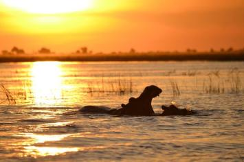Chobe National Park (11)