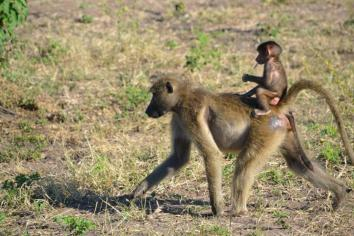 Chobe National Park (6)