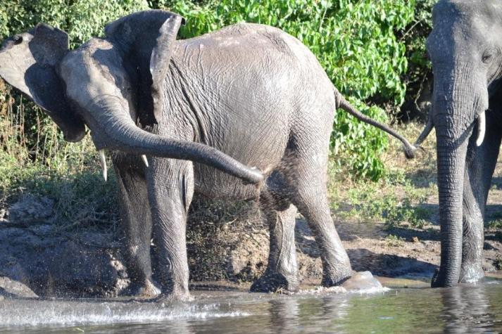 Chobe National Park (7)