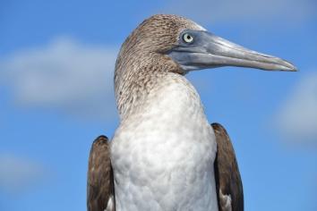 Galapagos (18)