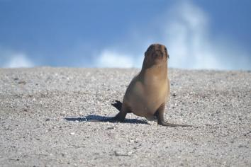 Galapagos (28)