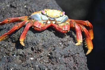 Galapagos (31)