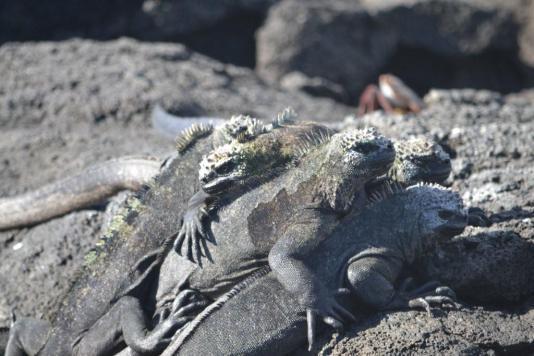 Galapagos (33)