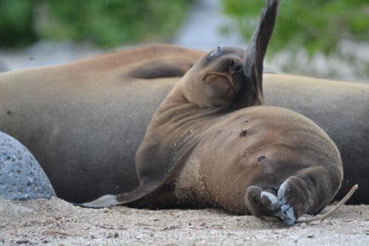 Galapagos (48)