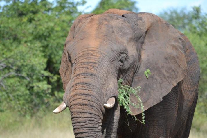 Kruger National Park (17)
