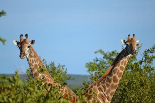 Kruger National Park (2)