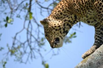 Maasai_Mara_South (3)