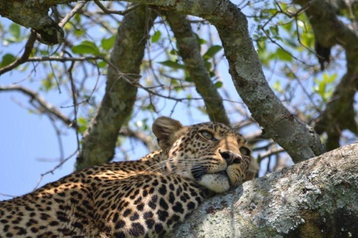Maasai_Mara_South (4)